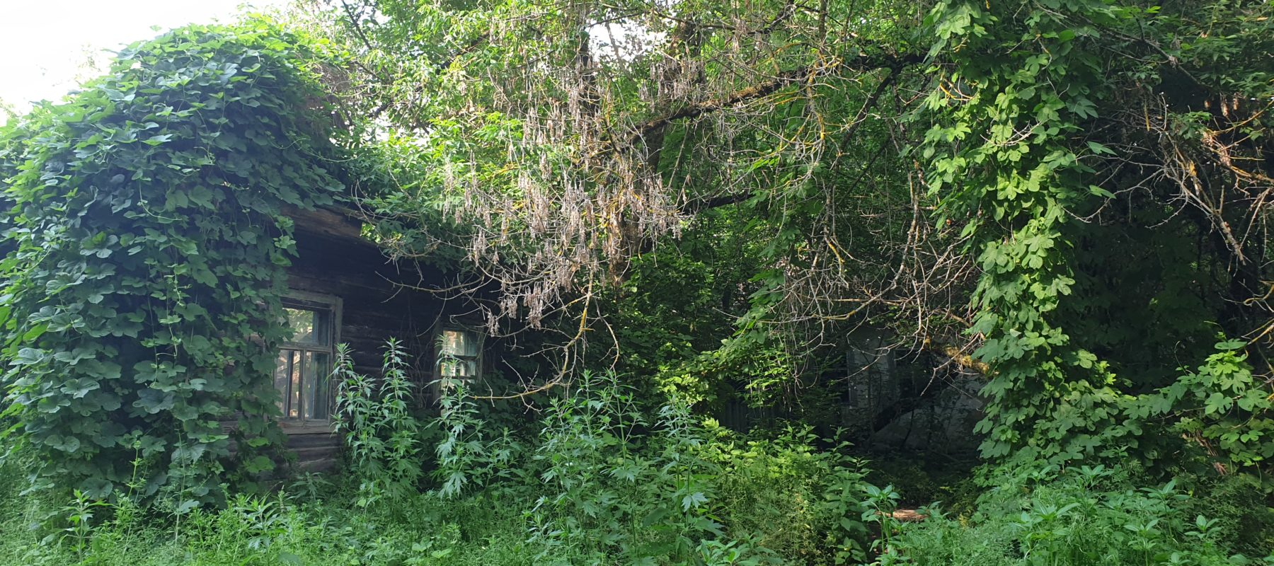 A thickets surrounded a house in a forest